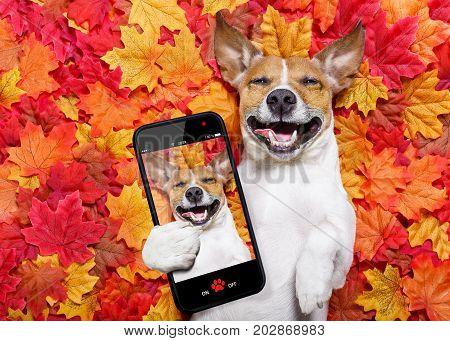 Autmn Fall Leaves Dog Selfie