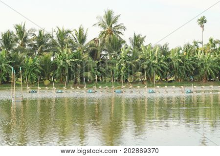 shrimp farm with paddle wheel aerator , landscape