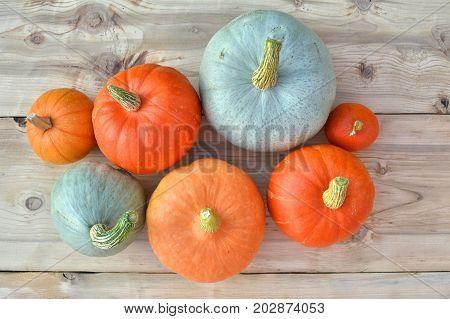 Orange And Blue Pumpkins