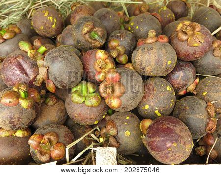 Fresh mangosteen for sale. A pile of mangosteen selling in a market, mangosteen background