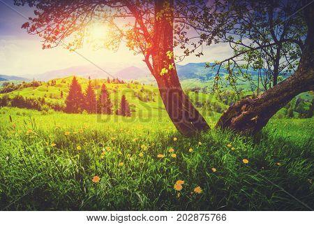 Spring Sunset. Vintage Colors