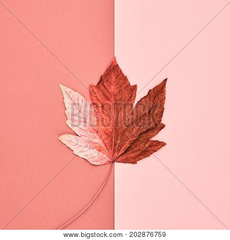 Autumn Arrives. Fall Leaves Background. Fall Fashion Design. Art Gallery. Minimal.Maple Leaf on Pink. Autumn Vintage Concept