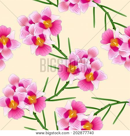 Pink Vanda Miss Joaquim Orchid. Singapore National Flower. on Ivory Beige Background. Vector Illustration.