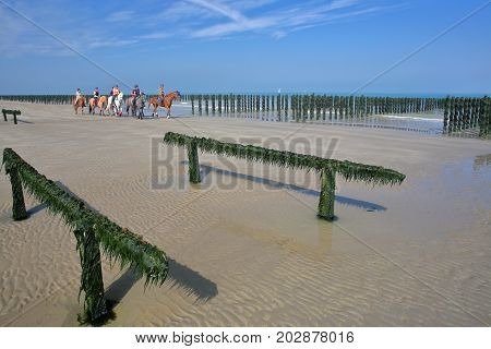CAP GRIS NEZ, FRANCE - AUGUST 27, 2017: Mussels cultivated on poles (bouchots) on the beach near Cap Gris Nez with horse riding in the background, Cote d'Opale, Pas de Calais, Hauts de France