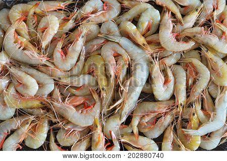 pile of fresh shrimps, close up view
