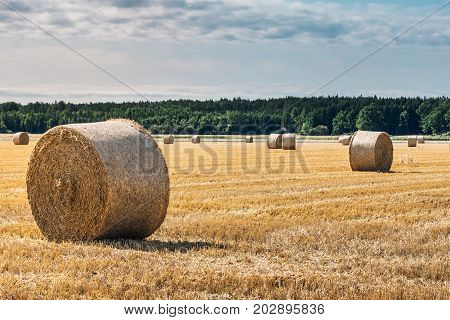 Harvested hay field with round spool shaped bales of hay in bright yellow color