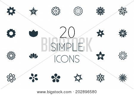 Elements Stock, Blossoming, Ranunculus And Other Synonyms Marguerite, Laurel And Orchids.  Vector Illustration Set Of Simple  Icons.