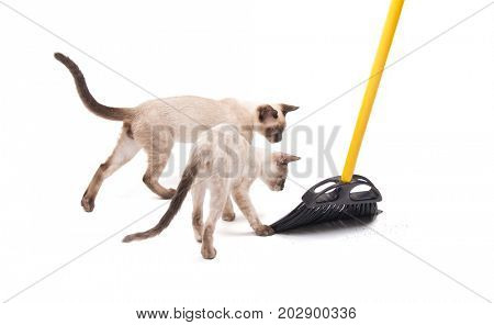 Two kittens helping with sweeping the floor, on white