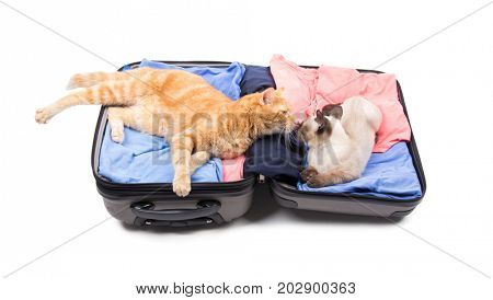 Two cats nose to nose, lounging on an open luggage, on white