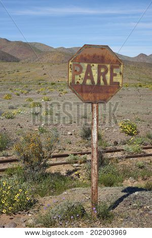 Old railway sign in the Atacama Desert of Chile alongside the Pan American Highway. Spring flowers resulting from unusual rain cover the surrounding area.
