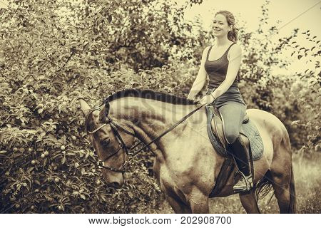 Animal horsemanship concept. Young woman sitting and ridding on a horse through garden on sunny spring day sepia