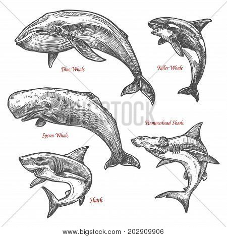 Whales and sharks sketch icons set. Vector isolated giant sea animals or mammal marine or ocean fishes of blue or killer whale orca, hammerhead shark and sperm whale or cachalot