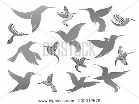 Colibri or humming bird icons. Vector isolated set of flying birds with spread flittering wings. Swallow, parrot or dove bird symbol of freedom and peace or interior decor design