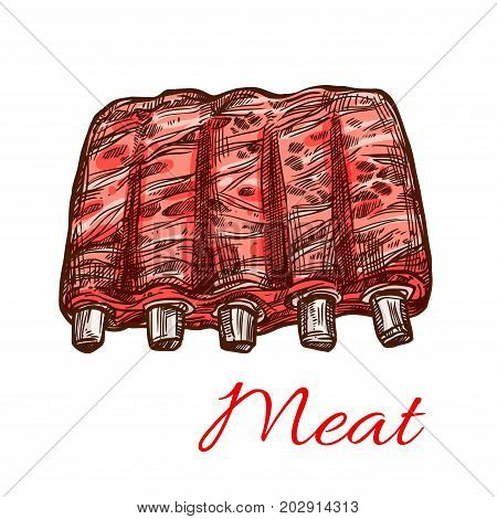 Meat sketch icon of mutton or pork fresh meaty ribs. Vector isolated veal hind quarter, beef loin or tenderloin filet of chicken or turkey meat for butchery shop or farmer market