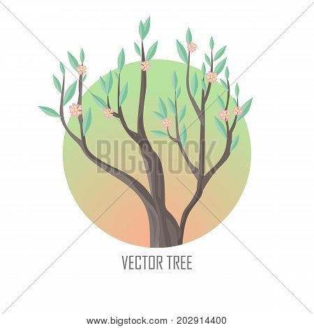 Tree with green leaves and pink flowers. Vector tree round icon. Tree forest, leaf tree isolated, tree branch nature green, plant eco branch tree, organic natural wood illustration.