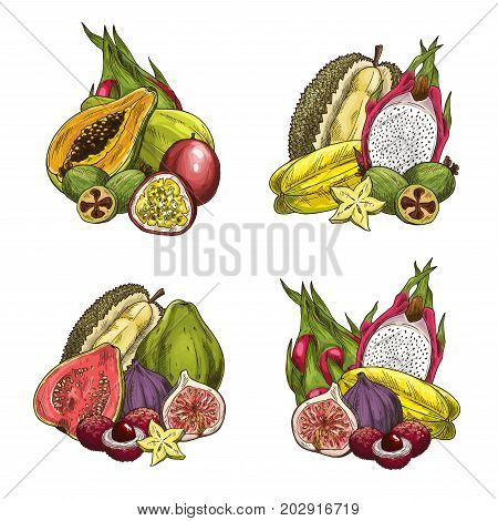 Exotic tropical fruits icons. Vector set of papaya, feijoa or passionfruit, durian and fig, lychee or guava and carambola starfruit, tamarillo or granadilla and dragon fruit or mango for fruit market