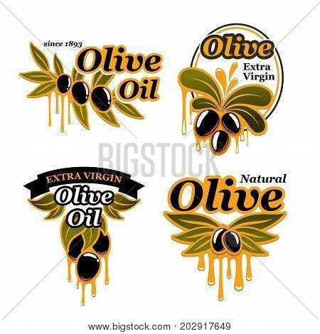 Olive oil and olives icons for cooking olive oil product. Vector isolated set of black and green branches with organic extra virgin oil drops for bottle label or package badge template