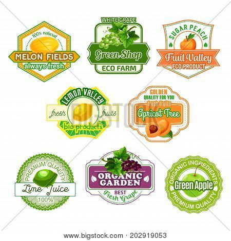 Fruits icons for juice label or farm market. Vector set of melon, white or black grape and juicy peach, lime or lemon citrus ripe summer harvest and apple for green organic shop templates