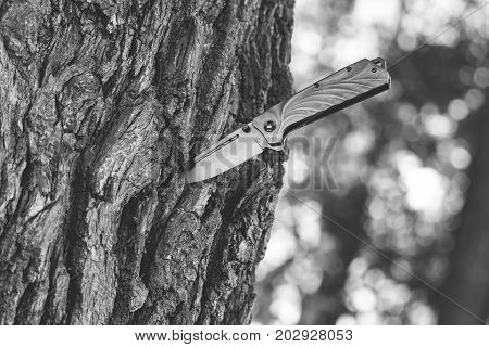 The knife stuck in the tree trunk. Black and white photo