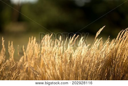 The grass is dry in the sun worrying in the wind