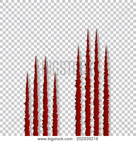 Red claws scratches - vector isolated on transparent background. Talons cuts animal cat, dog, tiger, lion, bear illustration. Can be used for decoration, as design element at printing, textile