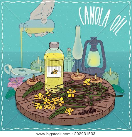 Plastic Bottle of Canola oil and flowers and seeds of Canola plant. Hand filling ancient oil lamp. Natural vegetable oil used as fuel for oil lamp