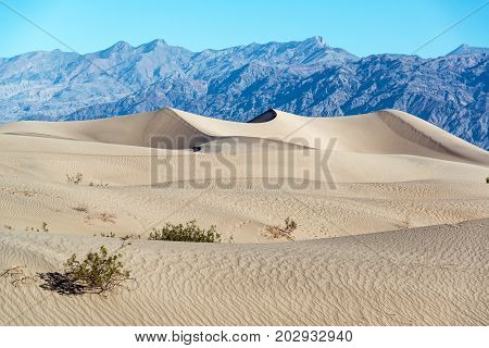 Mesquite Flat Sand Dunes with mountains in the background in Death Valley National Park in California
