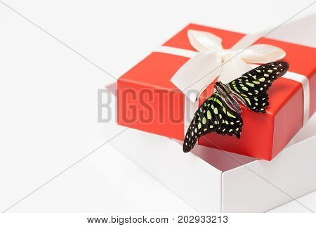 Butterfly Gift Box On White. Background Image.