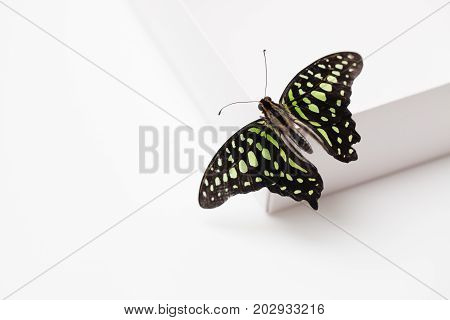 Green Butterfly Gift Box On White. Background Image.