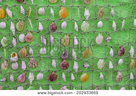 Cockleshells from the Sea related to the small rope