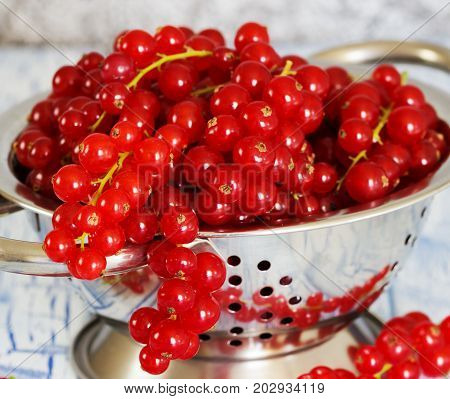 colander whit Red currant on wooden table