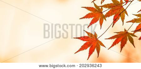 autumn leaves very shallow focus perfect fall background