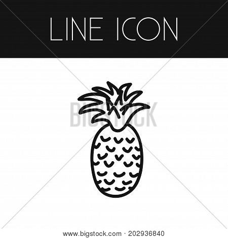 Tropical Fruit Vector Element Can Be Used For Ananas, Pineapple, Fruit Design Concept.  Isolated Freshness Outline.