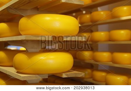 Typical Cheeses From Holland For Sale In The Shop