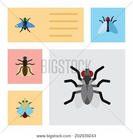 Flat Icon Buzz Set Of Tiny, Gnat, Dung And Other Vector Objects