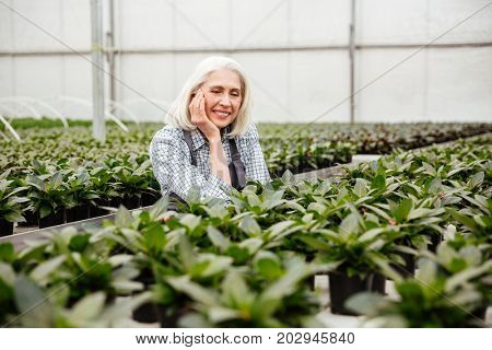 Cheerful grey-haired mature woman looking camera while standing in greenhouse near plants