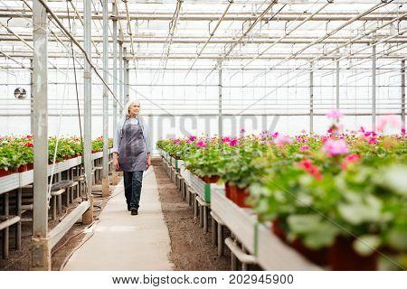 Full-length shot of mature woman gardener in apron standing in greenhouse