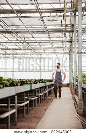 Full-length shot of bearded worker in apron standing in greenhouse