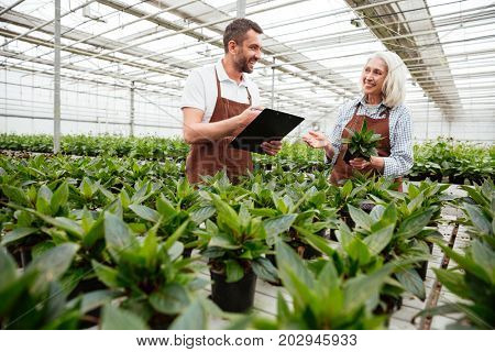 Cheerful workers, mature woman and smiling man, making research plants in greenhouse