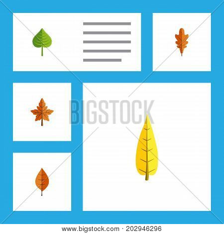 Flat Icon Leaves Set Of Linden, Hickory, Maple And Other Vector Objects