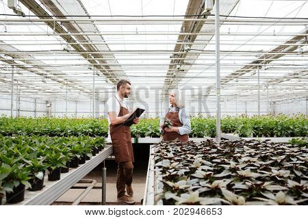 Gardeners, man and mature woman, talking about plants in greenhouse