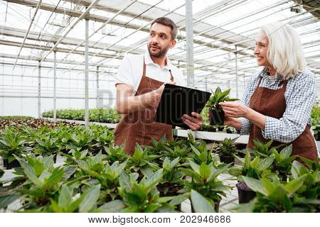 Cheerful mature woman showing green plant to her male colleague with folder in greenhouse