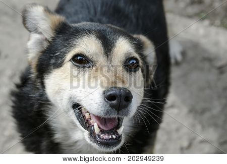 -portrait of a funny toothless dog looks up and smiles cheerfully