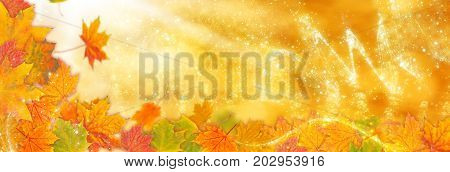 A Autumn background, Golden autumn as banner