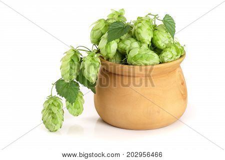 hop cones in a wooden bowl with leaf isolated on white background close-up. Top view.