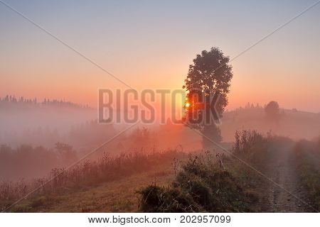 Foggy Rural Scene. Dirt Road At Misty Morning