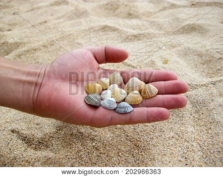 Cockleshells in a hand. sea entertainments on holiday
