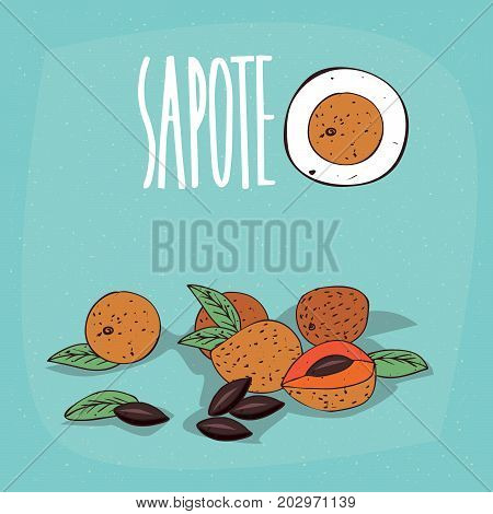 Set of isolated plant Sapote fruits herb with leaves seeds Simple round icon of Pouteria sapota with seeds on white background Lettering inscription Sapote
