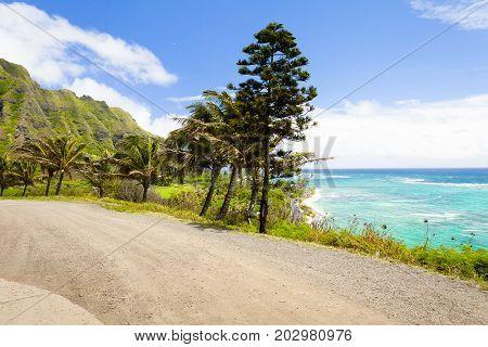 pali coast road with maritime pines in oahu island hawaii