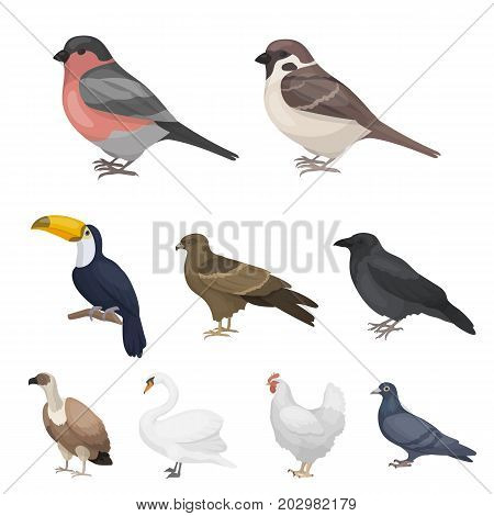 Bird set icons in cartoon style. Big collection of bird vector symbol stock
